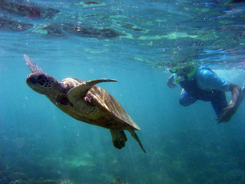 Ningaloo Coast included in UNESCO's World Heritage list